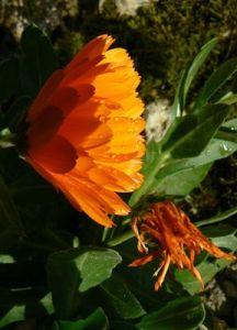 Flower_opt
